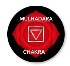 MulhadaraChakra